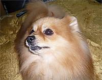 2008717huku7